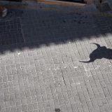 Sombra de un toro en los encierros de moratalla .